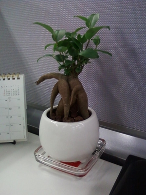 tree%E2%85%A0.JPG