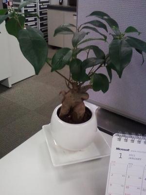 tree%E2%85%A1.JPG